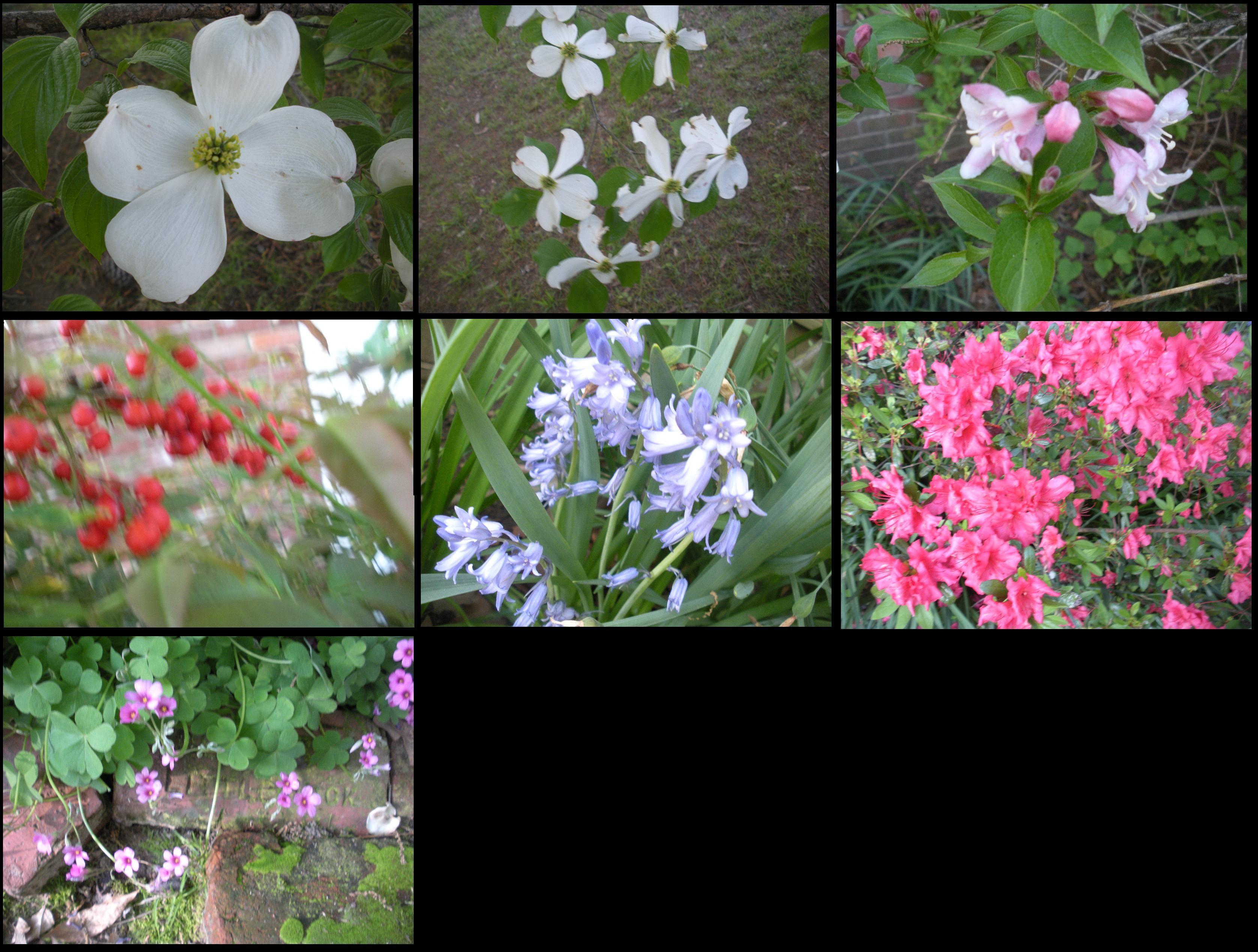 My Spring Flowers Are Pretty Inspite Of Me Jim Gatlings Crazy