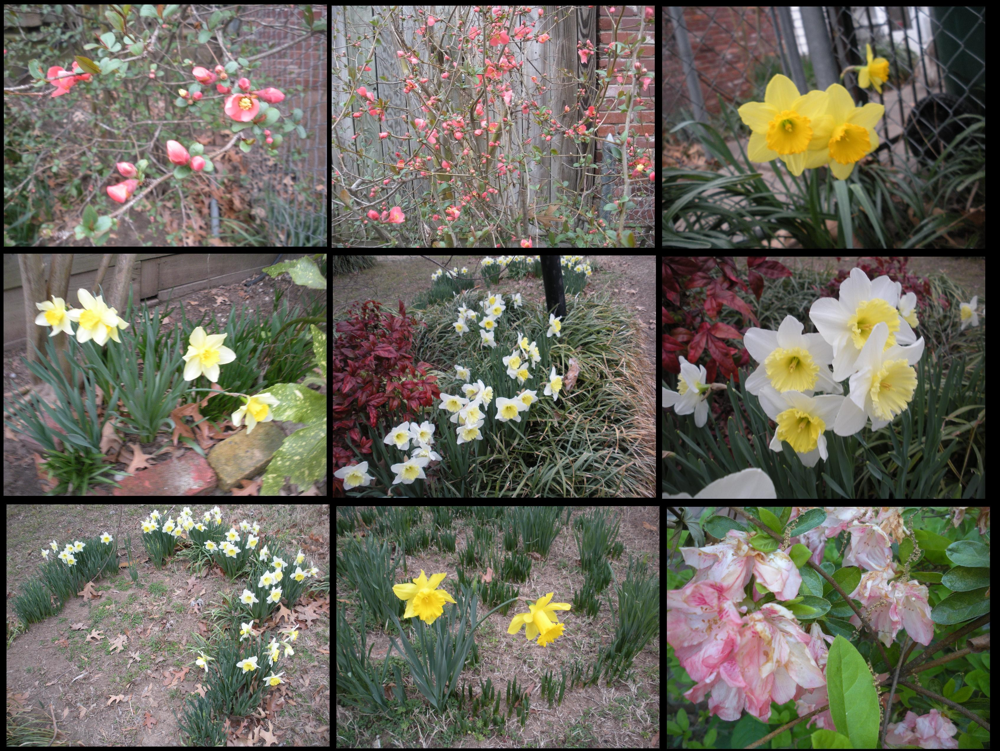 My Spring Flowers Are Pretty Inspite Of Me Jim Gatlings Crazy