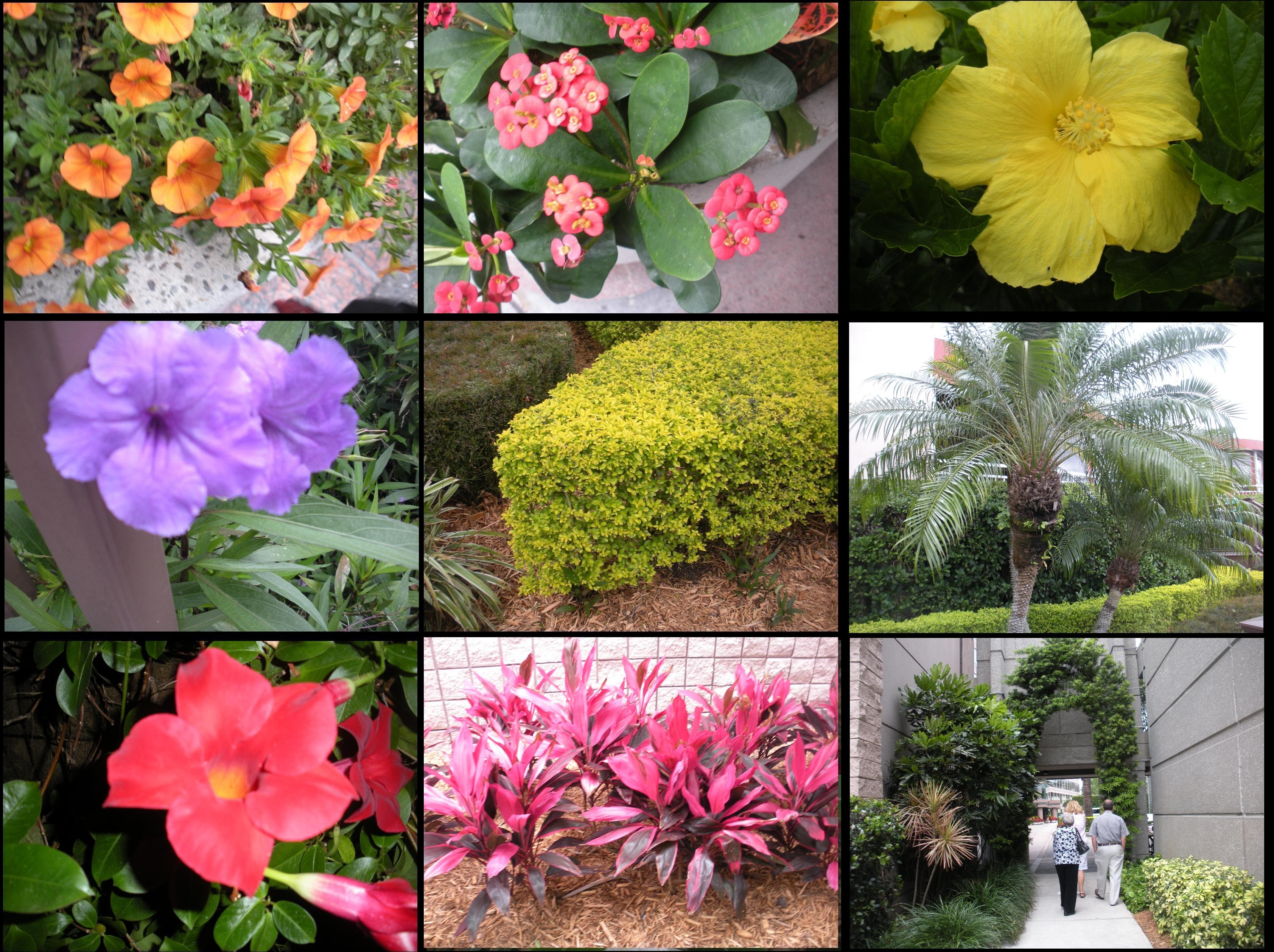 The Flowers Of Florida Color Everywhere Jim Gatlings Crazy