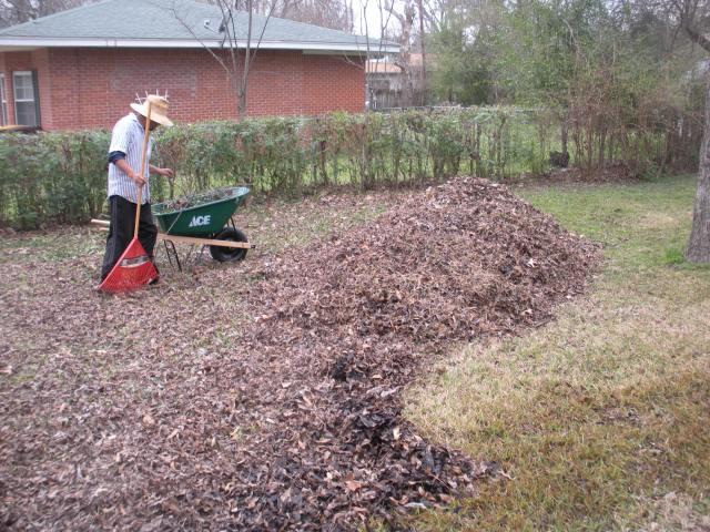 yard teacup gardens 001